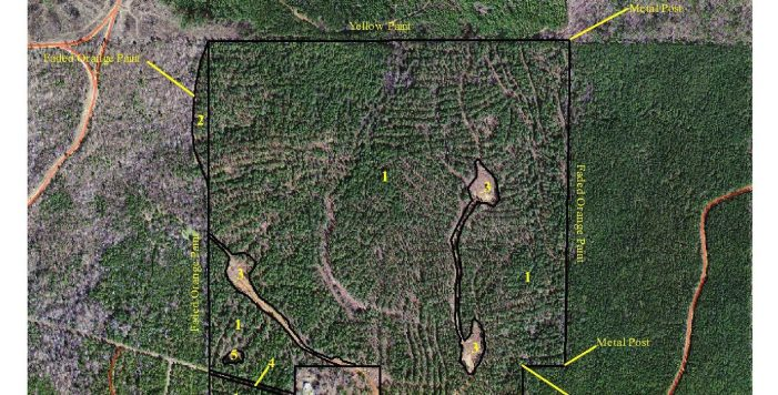 REDUCED: Choctaw County Pine Plantation and Hunting Tract